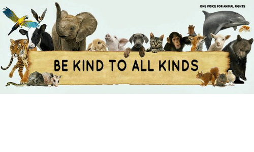 being kind to animals essay Can change their life and become kinder and happier only showing mercy to animals and being write my essay service and abused animals end up in municipal shelters.