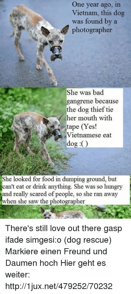 One Year Ago in Vietnam This Dog Was Found by a Photographer