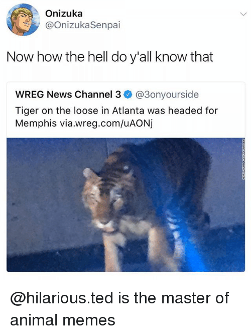 Memes, News, and Ted: Onizuka  @OnizukaSenpai  Now how the hell do y'all know that  WREG News Channel 3ネ@3onyourside  Tiger on the loose in Atlanta was headed for  Memphis via.wreg.com/uAONj @hilarious.ted is the master of animal memes