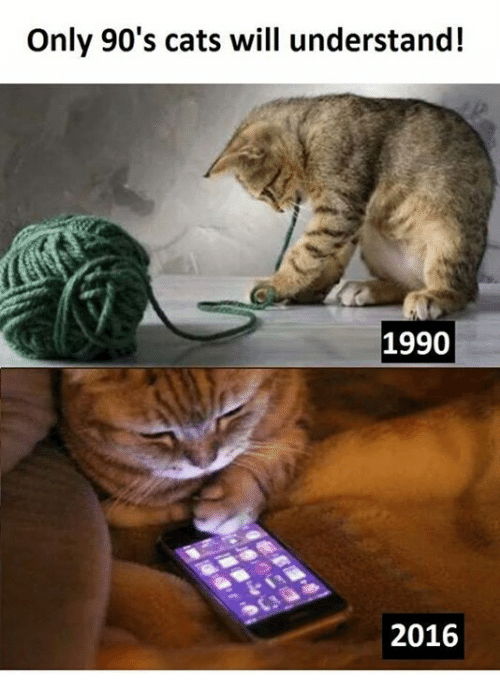 only 90s cats will understand 1990 2016 6821893 ✅ 25 best memes about 90's 90's memes,90s Memes