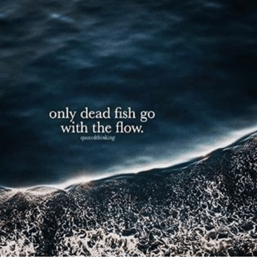 Only dead fish go with the flow meme on for Only dead fish go with the flow