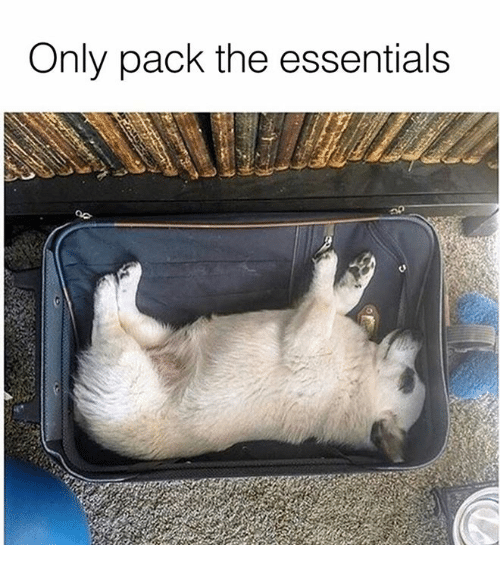 Dank, 🤖, and Essentials: Only pack the essentials