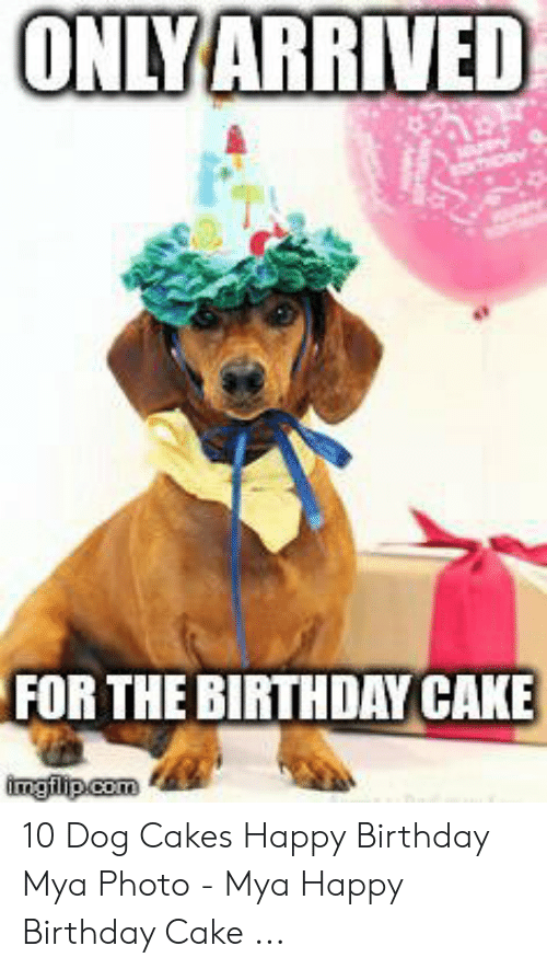 Enjoyable Onlyarrived For The Birthday Cake Imgilipcom 10 Dog Cakes Happy Birthday Cards Printable Giouspongecafe Filternl