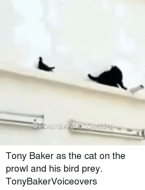 Memes, 🤖, and Cat: ONYBAKERCOMED Tony Baker as the cat on the prowl and his bird prey. TonyBakerVoiceovers
