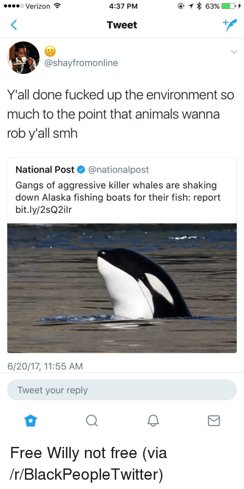 Animals, Blackpeopletwitter, and Killer Whales: oo Verizon  4:37 PM  Tweet  @shayfromonline  Y'all done fucked up the environment so  much to the point that animals wanna  rob y'all smh  National Post @nationalpost  Gangs of aggressive killer whales are shaking  down Alaska fishing boats for their fish: report  bit.ly/2sQ2ilr  6/20/17, 11:55 AM  Tweet your reply <p>Free Willy not free (via /r/BlackPeopleTwitter)</p>