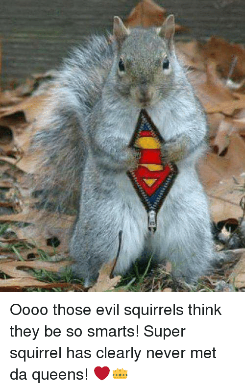 oooo those evil squirrels think they be so smarts super 25937730 ✅ 25 best memes about evil squirrels evil squirrels memes