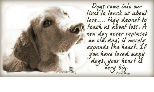 Or The Loveofthedog Dogs Come Into Our Lives To Teach Us About Love