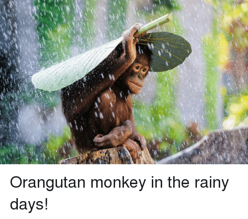 Funny Rainy Day: 25+ Best Memes About Funny