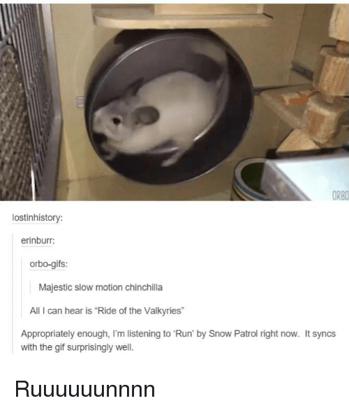 "Dank, 🤖, and Snow Patrol: ORBO  lostinhistory:  erinburr:  orbo-gifs:  Majestic slow motion Chinchilla  All can hear is ""Ride of the Valkyries""  Appropriately enough, I'm listening to Run' by Snow Patrol right now. It syncs  with the gif surprisingly well. Ruuuuuunnnn"