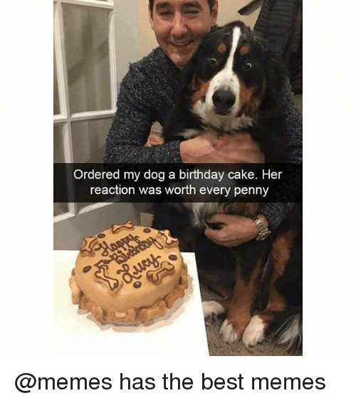 Ordered My Dog A Birthday Cake Her Reaction Was Worth Every Penny