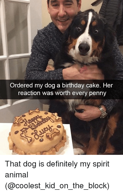 Birthday, Definitely, and Animal: Ordered my dog a birthday cake. Her  reaction was worth every penny That dog is definitely my spirit animal (@coolest_kid_on_the_block)