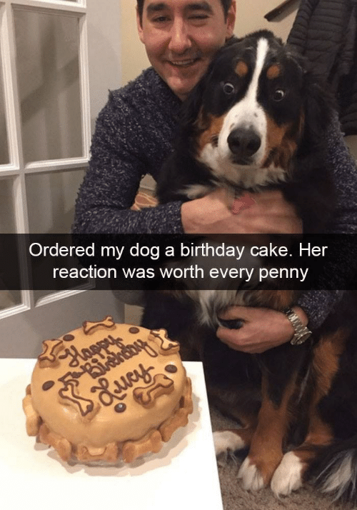 Birthday Cake And Her Ordered My Dog A Reaction
