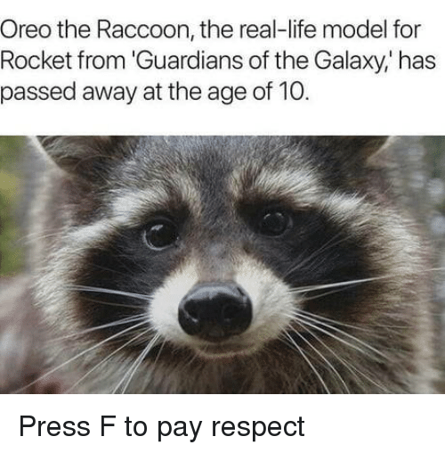 Life, Respect, and Guardians of the Galaxy: Oreo the Raccoon, the real-life model for  Rocket from 'Guardians of the Galaxy,' has  passed away at the age of 10. Press F to pay respect
