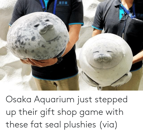 Aww, Reddit, and Target: Osaka Aquarium just stepped up their gift shop game with these fat seal plushies(via)