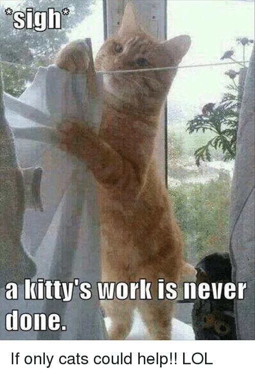 osigh-a-kittys-work-is-never-done-if-onl