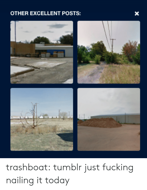 Fucking, Target, and Tumblr: OTHER EXCELLENT POSTS:  X trashboat: tumblr just fucking nailing it today