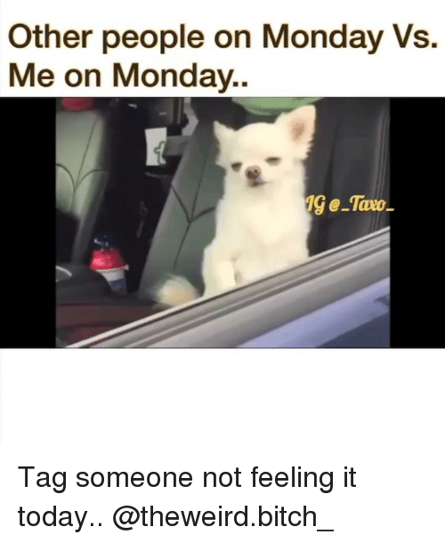 Bitch, Memes, and Today: Other people on Monday Vs.  Me on Monday.. Tag someone not feeling it today.. @theweird.bitch_