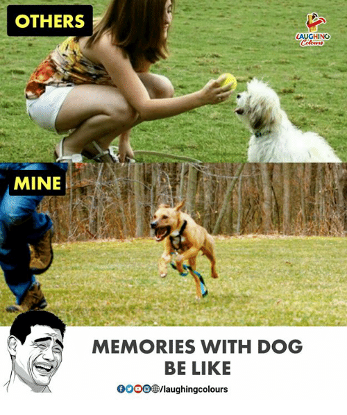 Be Like, Indianpeoplefacebook, and Dog: OTHERS  LAUGHING  MINE  MEMORIES WITH DOG  BE LIKE  0O0O  /laughingcolours