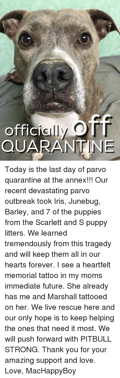 Memes, 🤖, and Push: OTT  offici  QUARANTINE Today is the last day of parvo quarantine at the annex!!! Our recent devastating parvo outbreak took Iris, Junebug, Barley, and 7 of the puppies from the Scarlett and S puppy litters. We learned tremendously from this tragedy and will keep them all in our hearts forever. I see a heartfelt memorial tattoo in my moms immediate future. She already has me and Marshall tattooed on her. We live rescue here and our only hope is to keep helping the ones that need it most. We will push forward with PITBULL STRONG. Thank you for your amazing support and love.   Love, MacHappyBoy