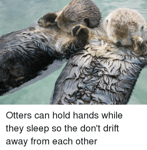 Otters Can Hold Hands While They Sleep So The Dont Drift Away From