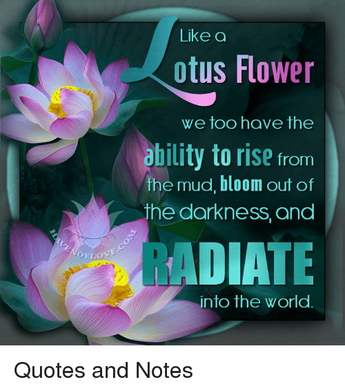 Ouelo like a otus flower we too have the ability to rise from the memes flower and quotes ouelo like a otus flower we too have the mightylinksfo