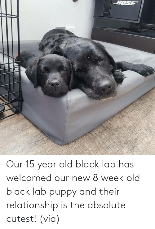 Aww, Reddit, and Target: Our 15 year old black lab has welcomed our new 8 week old black lab puppy and their relationship is the absolute cutest!(via)