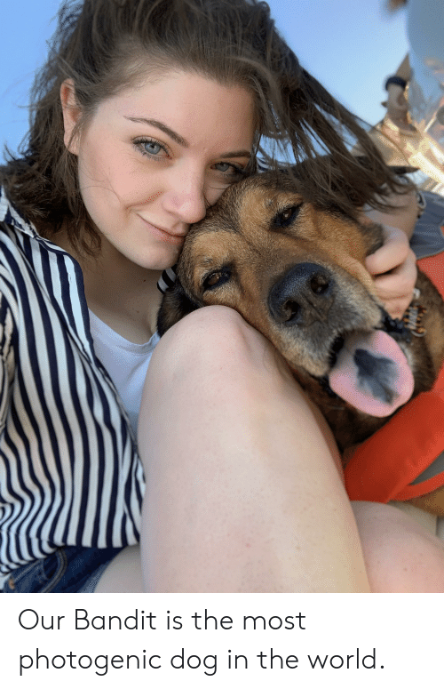 Our Bandit Is the Most Photogenic Dog in the World | World