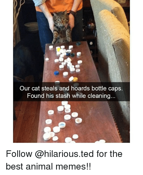 Memes, Ted, and 🤖: Our cat steals and hoards bottle caps.  Found his stash while cleaning... Follow @hilarious.ted for the best animal memes!!