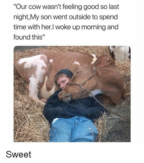 """Funny, Good, and Time: """"Our cow wasn't feeling good so last  night,My son went outside to spend  time with her.l woke up morning and  found this"""" Sweet"""