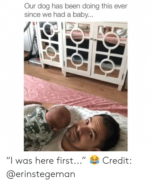 "Memes, Baby, and Been: Our dog has been doing this ever  since we had a baby ""I was here first..."" 😂 Credit: @erinstegeman"