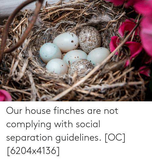 House, Our House, and Social: Our house finches are not complying with social separation guidelines. [OC][6204x4136]