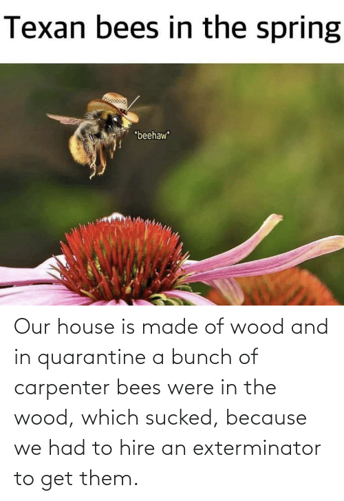 Reddit, House, and Bees: Our house is made of wood and in quarantine a bunch of carpenter bees were in the wood, which sucked, because we had to hire an exterminator to get them.