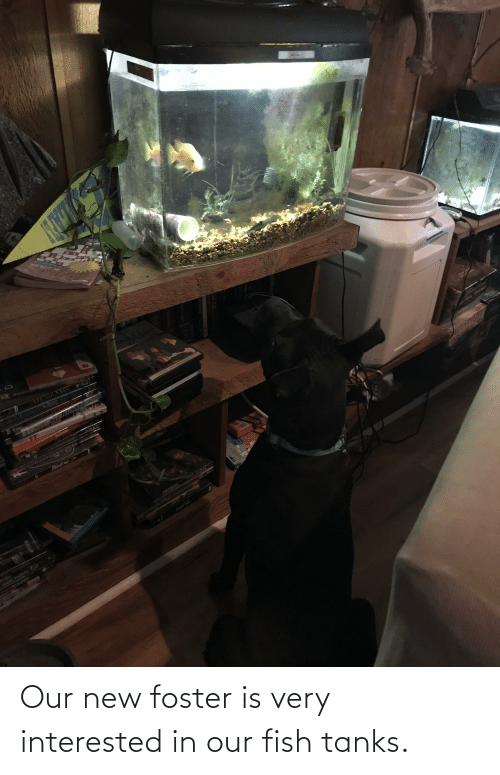Fish, Tanks, and New: Our new foster is very interested in our fish tanks.