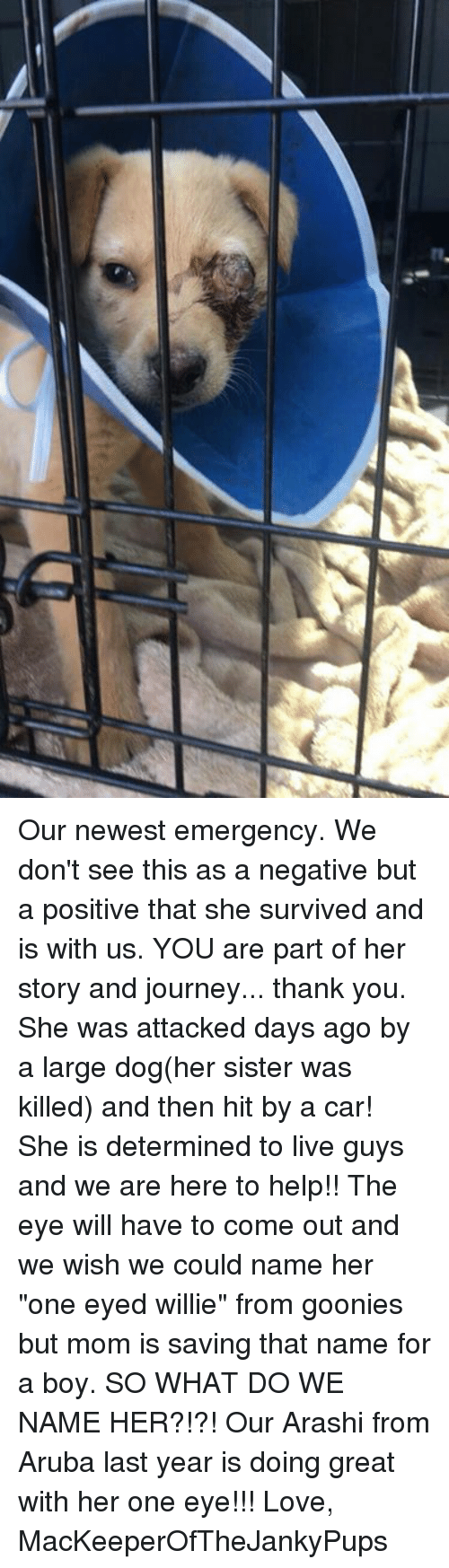"""Journey, Love, and Memes: Our newest emergency. We don't see this as a negative but a positive that she survived and is with us. YOU are part of her story and journey... thank you. She was attacked days ago by a large dog(her sister was killed) and then hit by a car! She is determined to live guys and we are here to help!! The eye will have to come out and we wish we could name her """"one eyed willie"""" from goonies but mom is saving that name for a boy. SO WHAT DO WE NAME HER?!?! Our Arashi from Aruba last year is doing great with her one eye!!!   Love, MacKeeperOfTheJankyPups"""