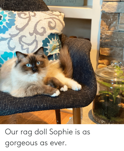 Gorgeous, Sophie, and Rag: Our rag doll Sophie is as gorgeous as ever.