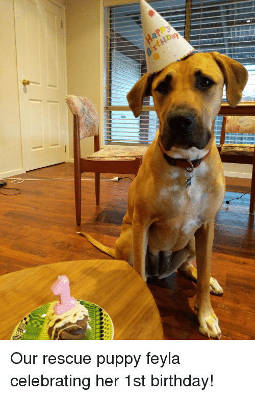 Birthday Puppy And Her Our Rescue Feyla Celebrating 1st