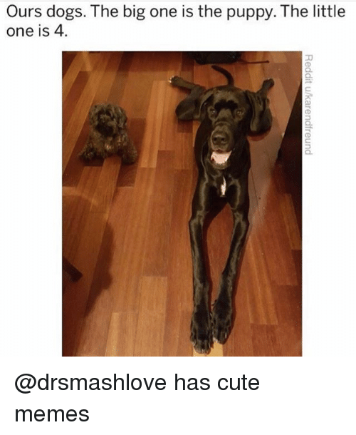 Cute, Dogs, and Funny: Ours dogs. The big one is the puppy. The little  one is 4. @drsmashlove has cute memes