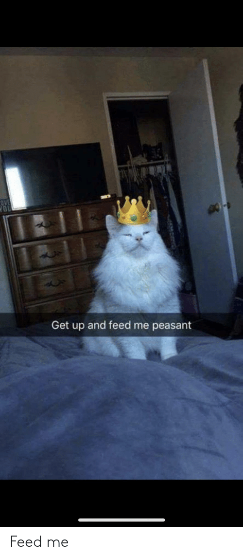 Peasant, Feed Me, and You: OVE  YOU  Get up and feed me peasant Feed me