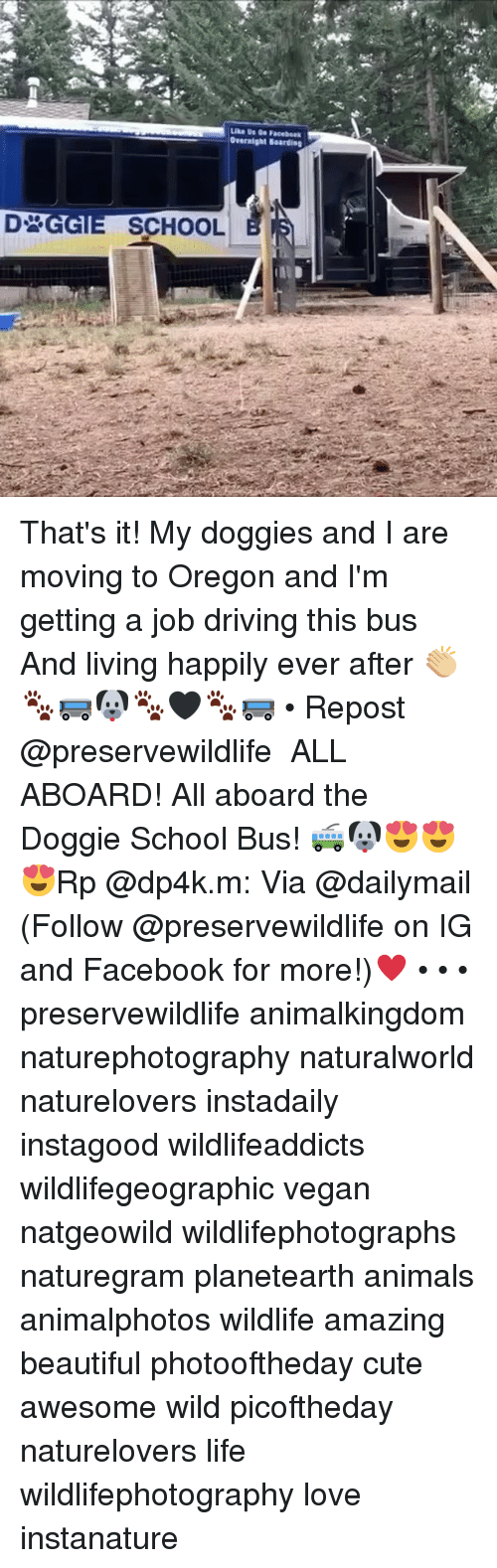 Animals, Beautiful, and Cute: Overnight Boardieg  SCHOOL That's it! My doggies and I are moving to Oregon and I'm getting a job driving this bus And living happily ever after 👏🏼🐾🚌🐶🐾🖤🐾🚌 • Repost @preservewildlife ・・・ ALL ABOARD! All aboard the Doggie School Bus! 🚎🐶😍😍😍Rp @dp4k.m: Via @dailymail (Follow @preservewildlife on IG and Facebook for more!)♥️ • • • preservewildlife animalkingdom naturephotography naturalworld naturelovers instadaily instagood wildlifeaddicts wildlifegeographic vegan natgeowild wildlifephotographs naturegram planetearth animals animalphotos wildlife amazing beautiful photooftheday cute awesome wild picoftheday naturelovers life wildlifephotography love instanature