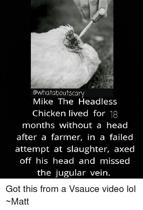 Head, Lol, and Memes: owhataboutscary  Mike The Headless  Chicken lived for 18  months without a head  after a farmer, in a failed  attempt at slaughter, axed  off his head and missed  the jugular vein. Got this from a Vsauce video lol ~Matt