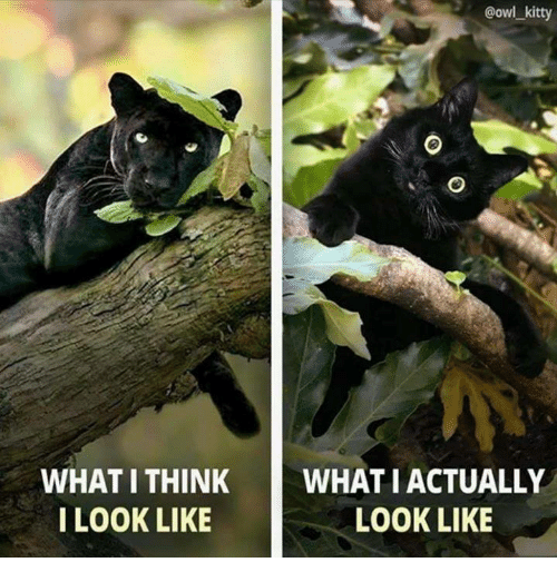 Memes, 🤖, and Owl: @owl_kity  WHAT I THINKWHAT I ACTUALLY  I LOOK LIKE  LOOK LIKE