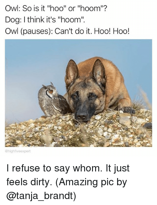 """Memes, Dirty, and Amazing: Owl: So is it """"hoo"""" or """"hoom""""?  Dog: I think it's """"hoom""""  Owl (pauses): Can't do it. Hoo! Hoo!  @high five expert I refuse to say whom. It just feels dirty. (Amazing pic by @tanja_brandt)"""