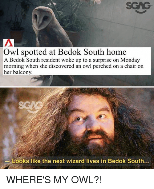 Memes, Home, and Monday: Owl spotted at Bedok South home  A Bedok South resident woke up to a surprise on Monday  morning when she discovered an owl perched on a chair on  her balcony  Looks like the next wizard lives in Bedok South... WHERE'S MY OWL?!