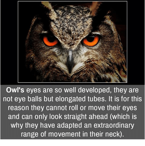 Memes, 🤖, and Owl: Owl's eyes are so well developed, they are  not eye balls but elongated tubes. It is for this  reason they cannot roll or move their eyes  and can only look straight ahead (which is  why they have adapted an extraordinary  range of movement in their neck)