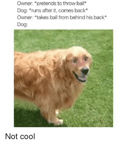 Cool, Dank Memes, and Back: Owner: *pretends to throw ball*  Dog: runs after it, comes back  Owner: *takes ball from behind his back*  Dog: Not cool