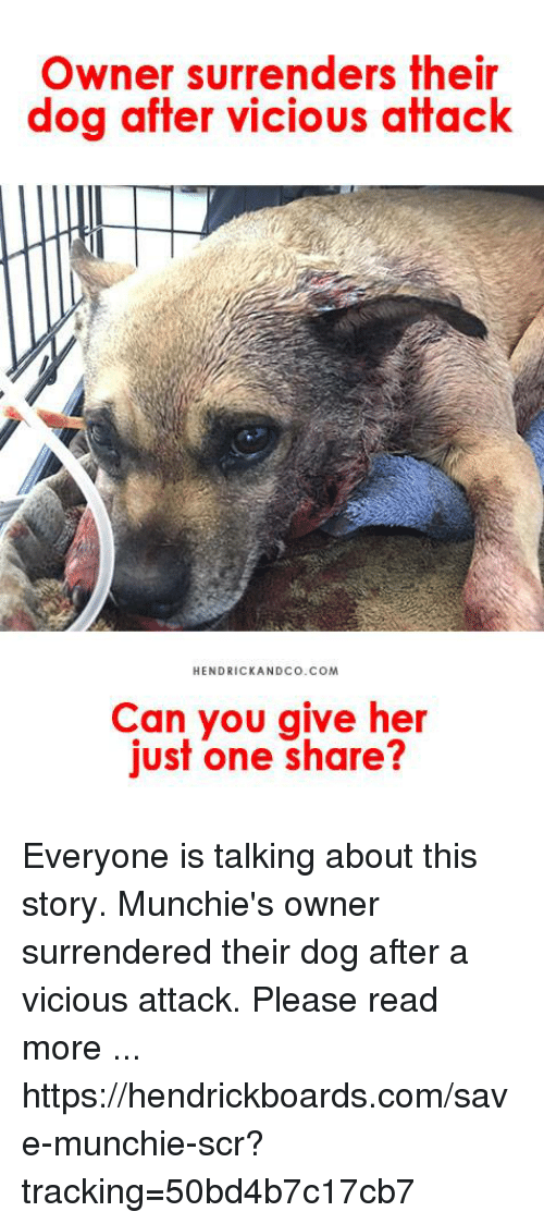 Memes, Munchies, and Vicious: Owner surrenders their  dog atter vicious affack  HENDRICKANDCo.COM  Can you give her  just one share? Everyone is talking about this story. Munchie's owner surrendered their dog after a vicious attack. Please read more ...  https://hendrickboards.com/save-munchie-scr?tracking=50bd4b7c17cb7