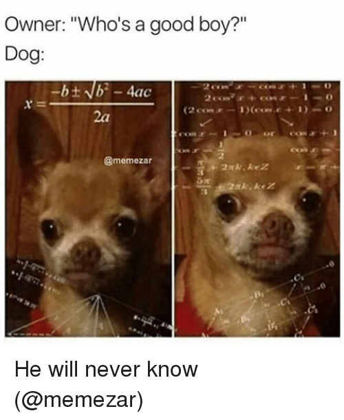 """Memes, Good, and Never: Owner: """"Who's a good boy?""""  Dog  4ac  CONF  @memezar He will never know (@memezar)"""