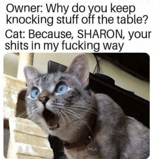 Fucking, Memes, and Stuff: Owner: Why do you keep  knocking stuff off the table?  Cat: Because, SHARON, your  shits in my fucking way  NALA