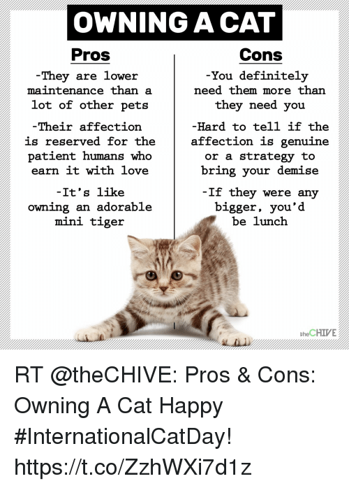 Pros And Cons Of Cats ✅ 25+ best memes about cat happy | cat happy memes