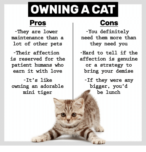 Owning A Cat Pros Cons They Are Lower Maintenance Than A